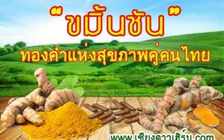 ขมิ้นชันไทย สรรพคุณดังทั่วโลก
