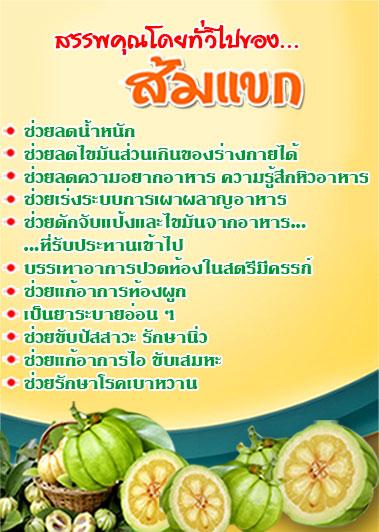 สรรพคุณของส้มแขก ลดความอ้วนและช่วยระบายอุจาระ