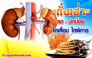 ป้องกันไตเสื่อม กินถั่งเช่าทิเบต